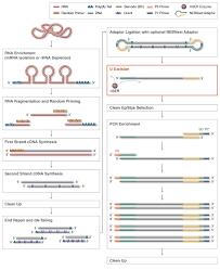 Efficient Neb Enzyme Compatibility Chart 2019