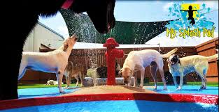 my splash pad manufacturer installer of dog water park features toys made
