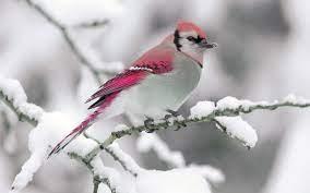bird winter snow branch nature - Photo ...
