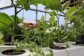 indoor gardening. Easiest Indoor Gardening Method Hydroponics T
