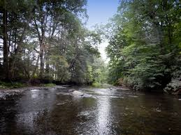 Loyalsock Creek Hatch Chart Mcmichael Creek Dhalo Section Among Waters Added To Keystone