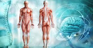 Cuerpo Humano: composición, sistemas y características