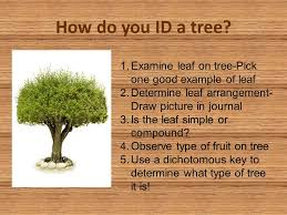 """Tree"""" The Record Your Different For It Data Every Project See And Ppt Download - Is How Throughout Will """"adopt Make Year You Tree A Observations Changes"""