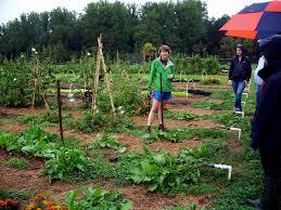 Kitchen Garden Farm Edible Trees And Plants Biogrounds