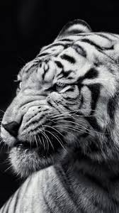 tiger iphone wallpaper. Exellent Iphone Preview Wallpaper Tiger Face Eyes Black And White To Tiger Iphone Wallpaper T