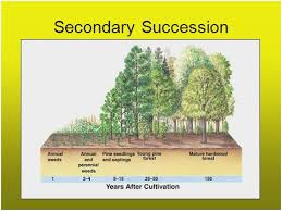 Primary And Secondary Succession Venn Diagram Flow Chart Of Primary Secondary Succession New Secondary Succession