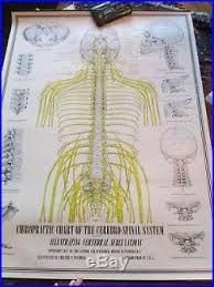Chiropractic Wall Charts Vintage Medical Equipment Blog Archive Vintage