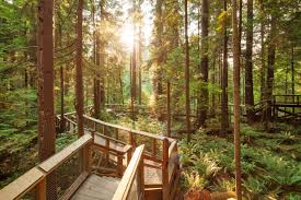 Image result for capilano suspension bridge park