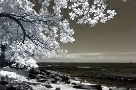 White Tree Beside Seashore Photo Free Stock Photo