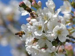 Сочинение на тему Ранняя весна Сочинение на  Ранняя весна