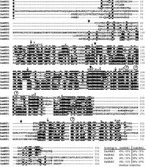 Naf To Gs Equivalent Chart Resume Wiring Diagram For Rover 45 Resume Examples Resume