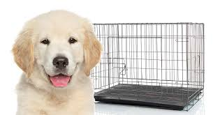 Midwest Dog Crate Size Chart What Size Crate For Golden Retriever Puppies And Adults