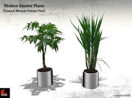 modern office plants. Modern Interior Plants Yucca \u0026 Mexican Fortune Tree COPY/MODIFY Office