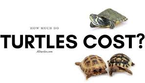 how much do turtles cost a complete