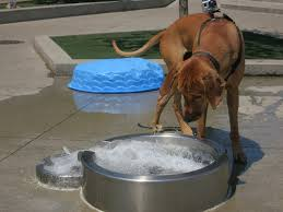 dog water fountain outdoor best