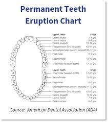 66 Eye Catching Baby Teeth Chart Timeline