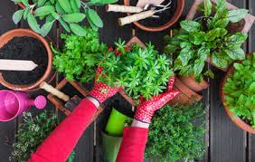 how to grow a herb garden. Organic Herb Garden Planting How To Grow A N