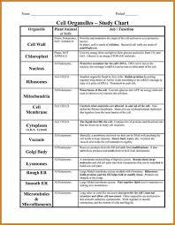 Function Chart Worksheet Cells Organelles Worksheet Worksheet Fun And Printable