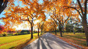 1366 X 768 Fall Wallpapers - Top Free ...