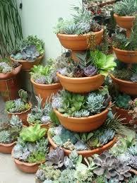 50 Best Succulent Garden Ideas For 2017Succulent Container Garden Plans