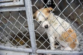 animal shelters sad. Brilliant Sad Dog Inside Kennel At Animal Shelter With Animal Shelters Sad H