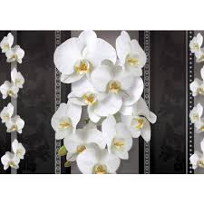 Paper Orchid Flower Mural No 1583 Non Woven Or Paper Orchids Wallpaper Orchid