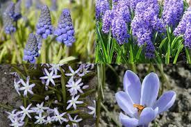 Výsledek obrázku pro jarní květiny