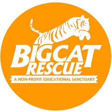 <b>Big Cat</b> Rescue - YouTube