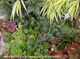 Small Picture Edible Shade Gardens