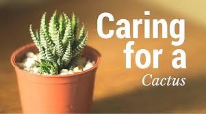 indoor cactus plant unusual indoor plants caring for a cactus large indoor cactus plants uk