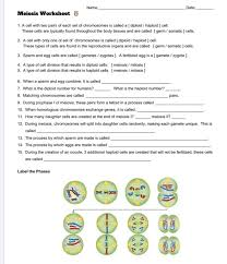 Begin with a single cell and watch as mitosis and cell division occurs. Solved Name Date Meiosis Worksheet 1 A Cell With Two P Chegg Com