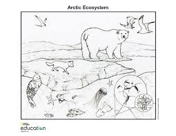 Small Picture Arctic Ecosystem National Geographic Society