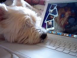 dog tech support. feds shut down phony apple, microsoft, google tech support scammers \u2013 consumerist dog t