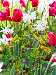 the best fragrant spring flowering bulbs for your garden