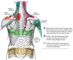 Fascia Chart Brian Wong Lmt Trigger Point Massage And Myo Fascial Release