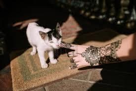 Fotka Ruka S Henna Tetování Dotýká Kočka 183372590 Fotobanka