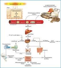 vitamin für stoffwechsel