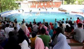 Misalnya saja seperti tempat parkir, toilet, resto hingga musholla. Ada Mini Zoo Lumba Lumba Di Pantai Sigandu Batang Republika Online