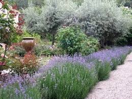 Small Picture 92 best Mediterranean garden images on Pinterest Mediterranean