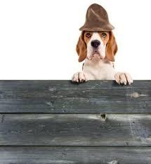 Aber auch für anderes gepäck eignen sich die hundegitter exzellent. Hundeabsperrgitter Fur Treppen Turen In Wohnung Und Garten