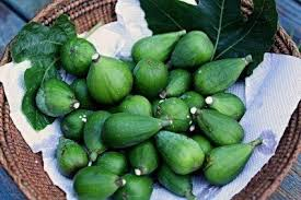 Fig Tree Harvesting How And When To Pick Figs
