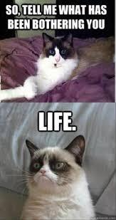 Cat Quotes Best Aaahhahahaha R Random Pinterest Grumpy Cat Grumpy