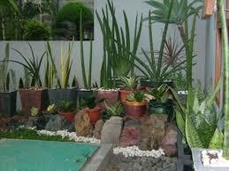 Hasil gambar untuk gambar tanaman rumah