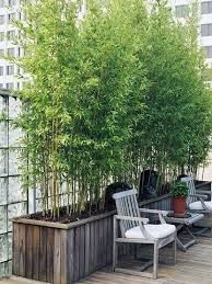 Small Picture Best 25 Bamboo garden ideas on Pinterest Bamboo screening