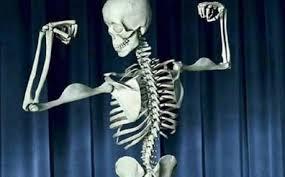 نتیجه تصویری برای استخوان ها