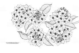 アジサイの花を描きます いたずら書きのベクターアート素材や画像を