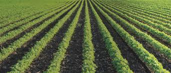 Field Crops Vegetables Irrigation Netafim