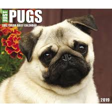 just pugs desk calendar calendars books gifts