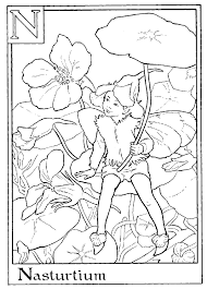 Small Picture Download and Print letter n for nasturtium flower fairy coloring
