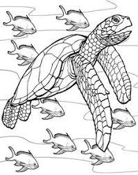 Small Picture sea turtle Coloring Pages for Adults Prasekolah Baiduri SK Kuala